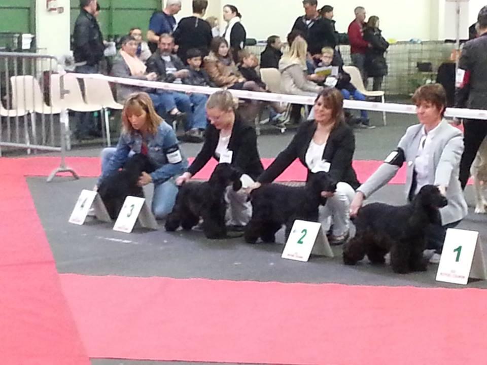 Classe Puppy femelle